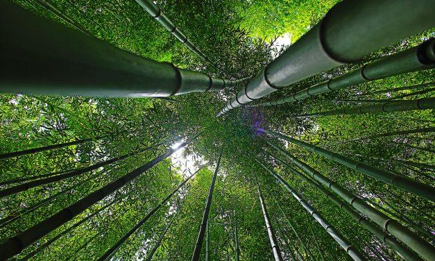 Földrengésbiztos bambuszházak