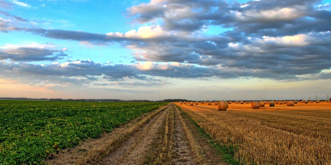 Új komplex talajkezelési technológia segíthet az aszály leküzdésében