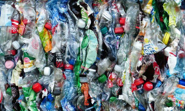A műanyagokat lebontó mikrobákat fejlesztő Poliloop az év magyar startupja