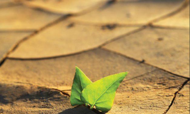Visszafordíthatatlan változások lehetősége – új kötet a klímaváltozásról