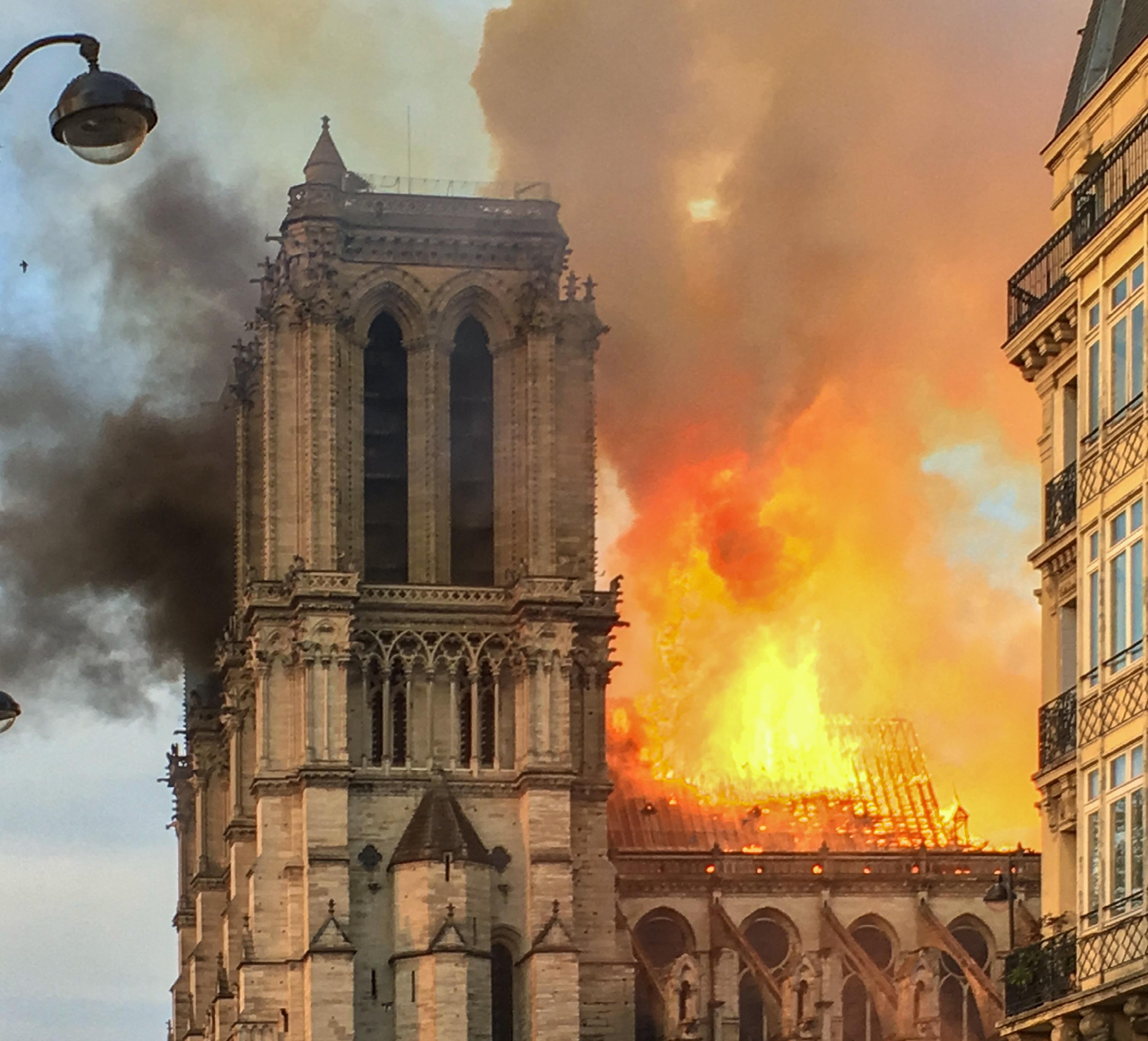 Megkezdődött a Notre-Dame helyreállításhoz szükséges fák kiválasztása