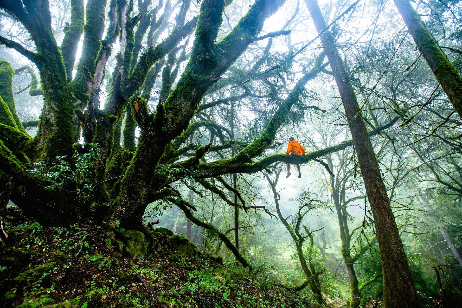 Új stratégiát mutattak be az európai erdők védelmére és helyreállítására